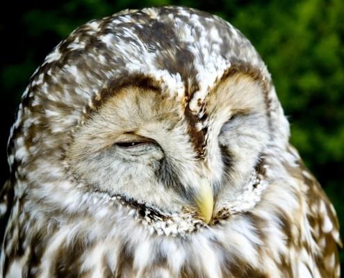 how to sleep more - sleep wise